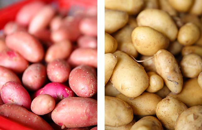 Azyマネージャーが育てた、採れたて新鮮野菜が続々入荷しております。